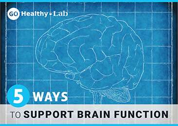 support brain function